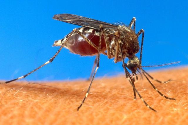 Brasil enfrenta epidemia do zika vírus, dengue e febre chikungunya, doenças transmitidas pelo mosquito Aedes aegypti